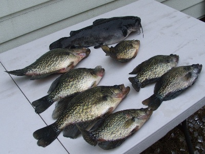 Crappie slab board for Crappie fishing florida